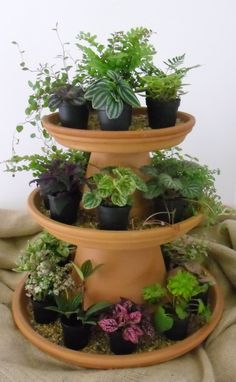 Ittie Bitties at IGC! 34 vintage Garden Decor ideas that add vintage flair to your outdoor space Herb Garden Planter, Herb Planters, Succulent Gardening, Succulent Pots, Succulents Garden, Garden Pots, Container Gardening, Herbs Garden, Diy Garden