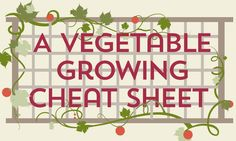 Everything you Need to Know About Vegetable Gardening in One Graphic - Healthy Holistic Living