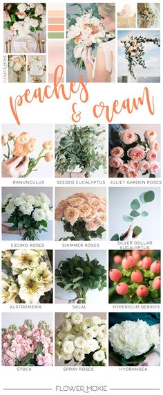 Flower Moxie helps brides DIY their flowers by providing florist-quality blooms, video tutorials, and printable instructions and recipes! Cream Wedding Colors, Bulk Wedding Flowers, Affordable Wedding Flowers, Diy Wedding Bouquet, Diy Bouquet, Floral Wedding, Hand Bouquet, Peach Flowers, Cream Flowers