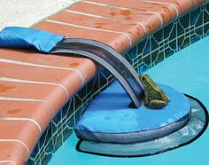 This tiny escape route for visitors: | 13 Crazy Pool Accessories That Totally Redefine Cool