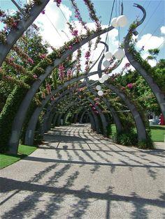 just a walk in the park - Southbank, Brisbane, Australia