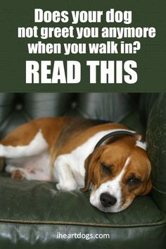 There may be a reason your dog doesn't run to the door...