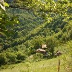 Le nostre casette nel bosco
