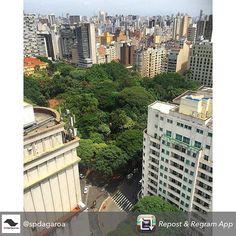 """Repost @spdagaroa Nossa versão de """"Central Park"""" na região central #PraçaDaRepública. - Clique de @rafagushi #centrosp #centrodesp #republica #república #park #landscape #skyline"""