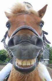 Cheeeese - Horses Funny - Funny Horse Meme - - Cheeeese Horses Funny Funny Horse Meme Cheeeese The post Cheeeese appeared first on Gag Dad. The post Cheeeese appeared first on Gag Dad. Funny Horse Videos, Funny Horse Memes, Funny Horse Pictures, Funny Horses, Cute Horses, Funny Animal Memes, Pretty Horses, Horse Love, Beautiful Horses