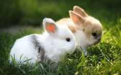 Baby Animals on Rabbit Baby bunnies and Bunny Cute Bunny Gif, Cute Bunny Pictures, Rabbit Pictures, Cute Baby Bunnies, Cute Baby Animals, Cute Cats, Cute Babies, Rabbit Wallpaper, Tier Wallpaper
