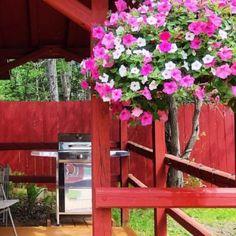 Michigan's Upper Peninsula Bucket List, 50 things to do Easy Small Garden Ideas, Garden Yard Ideas, Honeysuckle Plant, Upper Peninsula, Hanging Pots, Outdoor Planters, Small Gardens, Stunning View, Travel Tips