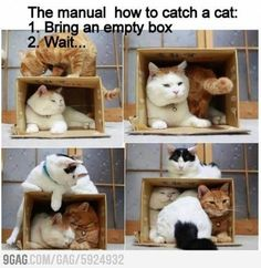 Cats and the box