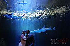 #Shedd aquarium #Chicago after wedding shoot unique wedding photos sharks with bride groom