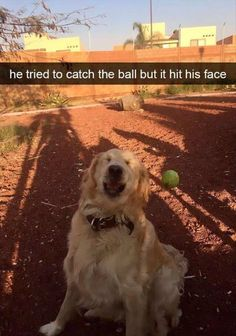 Funny Animal Memes Of The Day – 52 Pics - Lovely Animals World 32 Funny Animals Guaranteed to Make You Laugh This dog got tricked LOL 24 Funny Animal Pictures Of The Da. Funny Animal Jokes, Funny Dog Memes, Cute Funny Animals, Funny Animal Pictures, Funny Cute, Funny Dogs, Cute Dogs, Funny Puppies, Top Funny