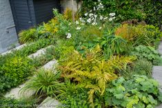 Marianne Majerus Garden Images Garden Images, Stepping Stones, Stock Photos, Plants, House, Haus, Planters, Plant, Homes