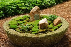 Wisconsin moss trough Rotary Botanical Gardens -Moss in a simple dish planter