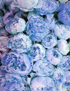 Blue Floral Crush