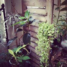 ゆう @kebint 黄緑の枝垂系が仲...Instagram photo | Websta (Webstagram)