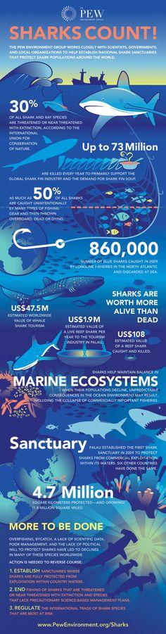 Every Week is Shark Week - Pew Environment Group