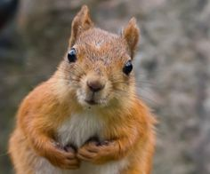 """""""Now that you're doing Paleo, you've got more nuts than you need, right?"""" :)"""