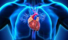 13 Tipps für ein gesundes Herz: Herz Grafik Wie gesund Ihr Herz ist, bestimmen Sie! Durch einfache Schritte können Sie selbst darauf Einfluss nehmen, wie stark Ihr Herz wird und bleibt. 13 Tipps für ein rundum gesundes Herz. Für Ihr Herz müssen Sie nicht gleich Ihr gesamtes Leben umkrempeln, es gilt: Kleine Schritte - große Wirkung. Schon leichte Veränderungen im Alltag, regelmäßig ausgeübt, halten Ihr Herz jahrelang gesund. Mit positive Nebeneffekten dürfen Sie rechnen: Was Ihr Herz…