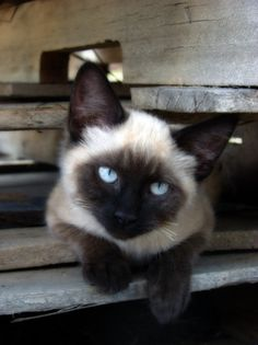 Dark beauty, aren't you pretty! Those eyes are gorgeous!
