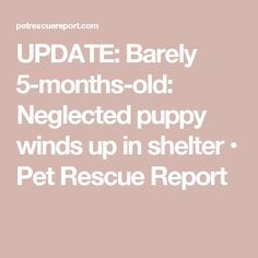 UPDATE: Barely 5-months-old: Neglected puppy winds up in shelter • Pet Rescue Report