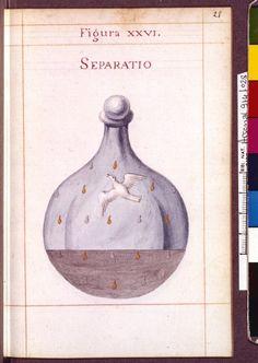 Figura XXVI - Separatio - Sapientia veterum philosophorum, sive doctrina eorumdem de summa et universali medicina 40 hierogliphis explicata