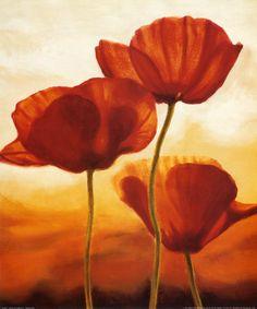 poppies - make into sugar flowers
