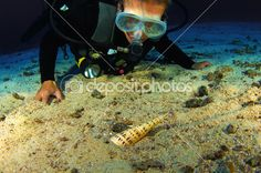 Diver with Auger Snail by Greg Amptman