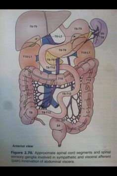 Abdomen spinal levels and landmarks Human Body Anatomy, Human Anatomy And Physiology, Examen Clinique, Pa School, Medical Anatomy, Anatomy Study, Nursing Notes, Student Studying, Body Systems