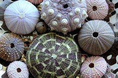 Patterns in Nature by Sim.B, via Flickr