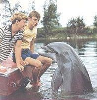 Flipper, O golfinho (série de TV) 1964