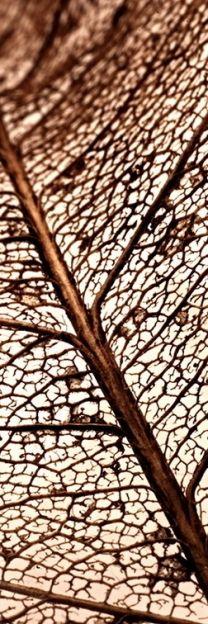 Skeletal leaf close-up; -texture -color -lighting