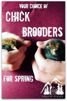 Your Choice of Chick Brooders for Spring - IdlewildAlaska