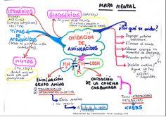 Mapa mental acerca del catabolismo de aminoácidos.