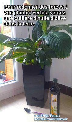 Ne vous inquiétez pas, pas besoin d'acheter d'engrais chimiques ! L'astuce est d'utiliser un produit que l'on a tous dans ses placards pour revigorer les plantes vertes. Ce produit, c'est l'huile d'olive. Découvrez l'astuce ici : http://www.comment-economiser.fr/plantes-qui-s-affaiblissent-engrais-naturel.html?utm_content=bufferae704&utm_medium=social&utm_source=pinterest.com&utm_campaign=buffer