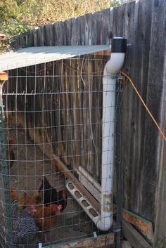 Building A DIY Chicken Coop If you've never had a flock of chickens and are considering it, then you might actually enjoy the process. It can be a lot of fun to raise chickens but good planning ahead of building your chicken coop w Pvc Chicken Feeder, Automatic Chicken Feeder, Backyard Chicken Coops, Chicken Coop Plans, Building A Chicken Coop, Diy Chicken Coop, Chickens Backyard, Water Feeder For Chickens, Chicken Run Ideas Diy