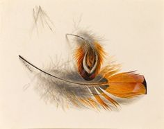 Watercolor study of pheasant feathers by Edward Lear (1812-1888)