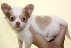 We love dogs!    From Mighty Lists: 8 animals with heart shaped spots