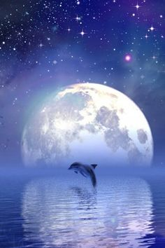 Magical ... jumping dolphin ... giant moon ... beauty ..