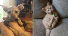 Woman Saves Scared Kitten Found in Storm Drain and Raises Him into Affectionate, Happy Cat.