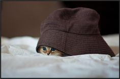 The cat in a hat