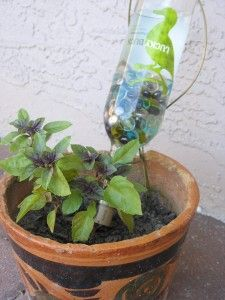 Oh my gosh! DUH! Why didnt I think about that, I was going to buy some of those water globes! Looks like its time to decorate some old wine and liquor bottles...I might use the mini wine bottles for my small house plants!