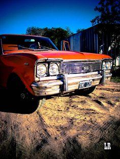 Orange wild