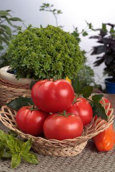 Tomaten in einer Schale zur Aufbewahrung
