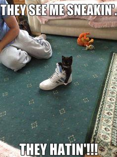Sneaker Kitten - www.meme-lol.com