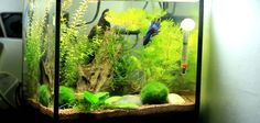 Large Driftwood And Planted Aquarium Aquariums