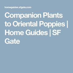 Companion Plants to Oriental Poppies | Home Guides | SF Gate