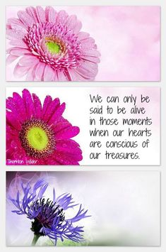 We can only be said to be alive in those moments when our hearts are concious of our treasures. Thornton Wilder quote Thornton Wilder, Magic Quotes, In This Moment, Make It Yourself, Sayings, Hearts, Magical Quotes, Lyrics, Quotations