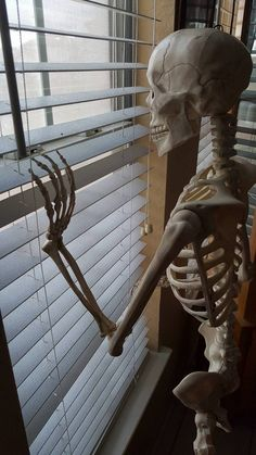 The original Pose-N-Stay skeleton by Seasons. A fun decorative halloween decoration Spooky Memes, Spooky Scary, Reaction Pictures, Funny Pictures, Medical Wallpaper, Funny Skeleton, Mood Pics, Cartoon Memes, Cursed Images