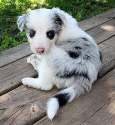 cutie dog in willard $700