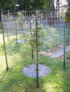 10 Raised Garden Fence Ideas, Amazing as well as Gorgeous - DIY Garten Ideen Deer Garden, Olive Garden, Garden Shrubs, Shade Garden, Garden Landscaping, Garden Ponds, Fruit Tree Garden, Garden Trees, Fruit Trees