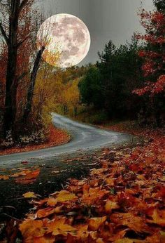 Nature pictures: beautiful of life The post Nature pictures: beautiful pictures # autumn # moon autumn scenery appeared first on Trendy. Fall Pictures, Nature Pictures, Beautiful World, Beautiful Places, Beautiful Moon Pictures, Full Moon Pictures, Pretty Photos, Beautiful Scenery, Simply Beautiful